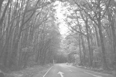B&W photo of road going through a forest
